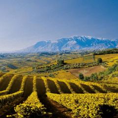 Weingut Azienda Agriverde