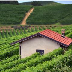 Weingut Azienda Agricola Claudio Alario