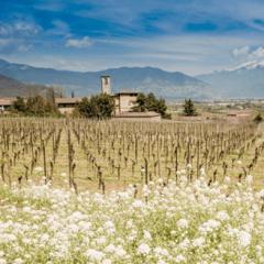 Weingut Franciacorta