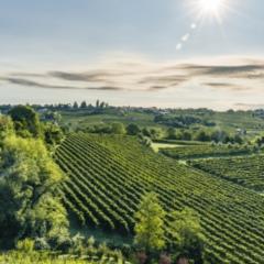 Weingut Santa Marherita